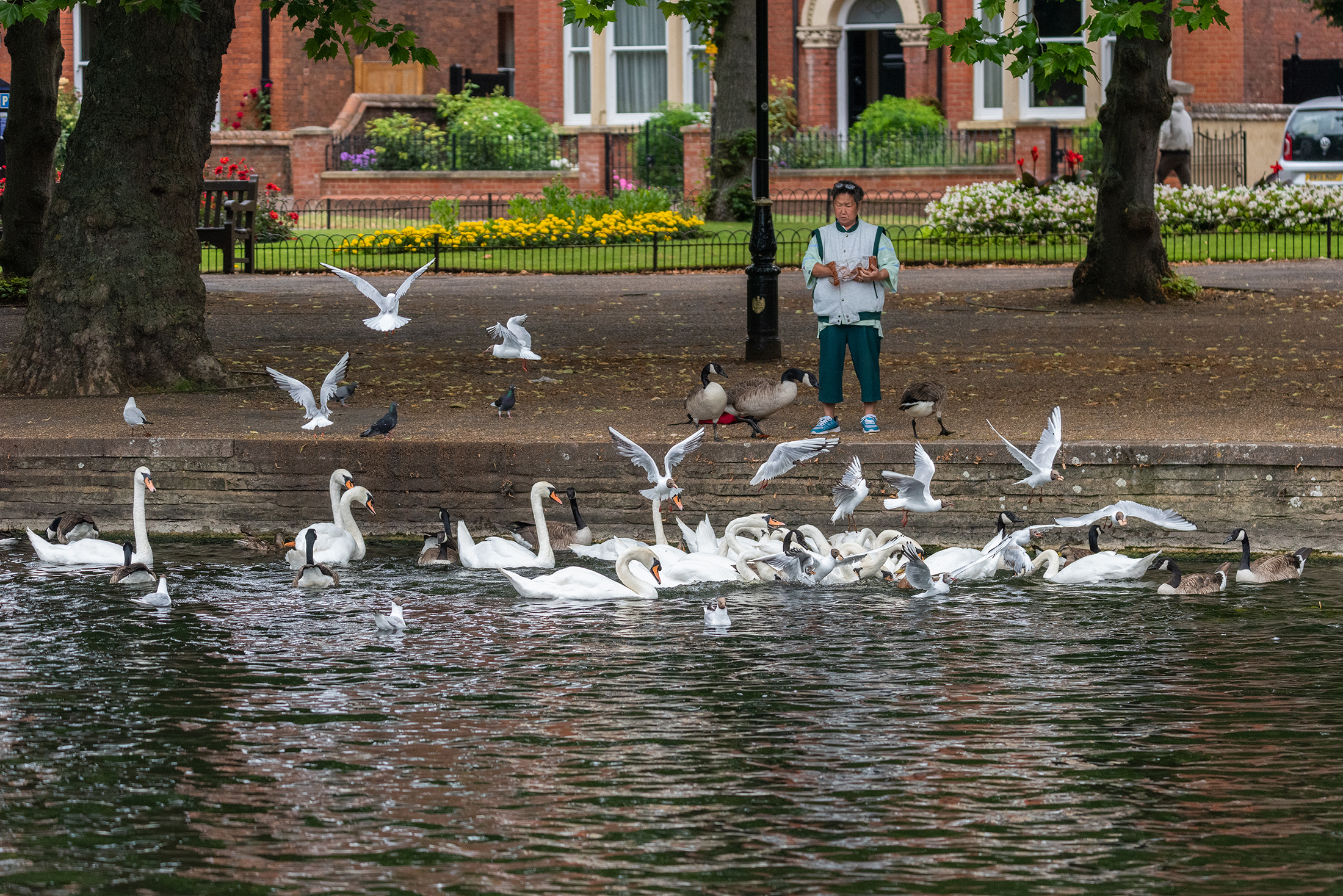 Feeding the birds, River Great Ouse, Bedford